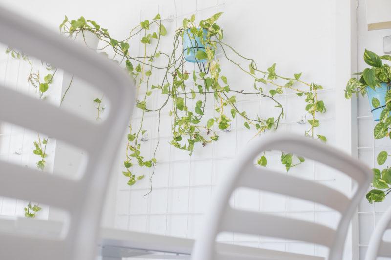 Vegetación Diseño Interior Gastro Club