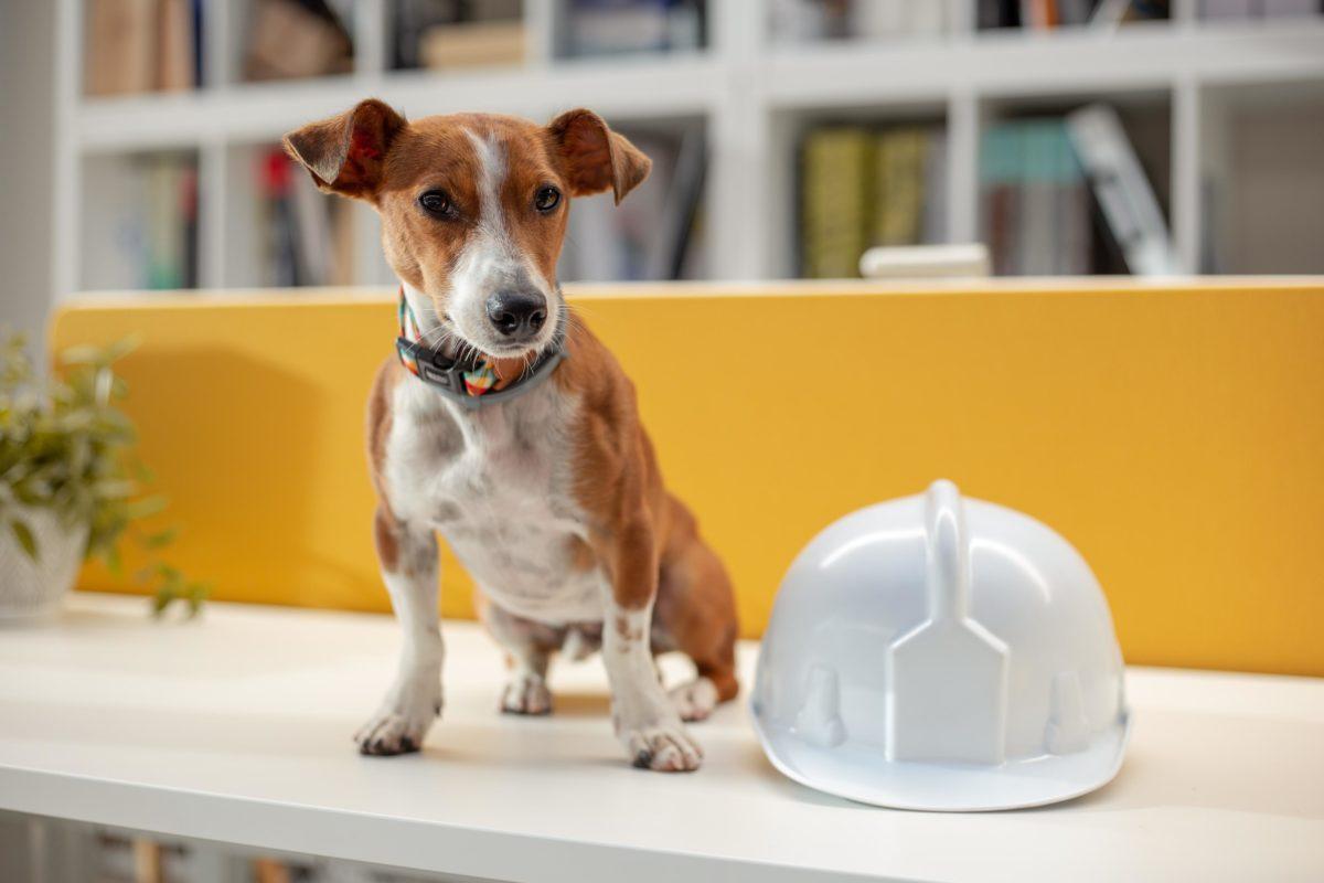 Oficinas pet friendly Día del perro